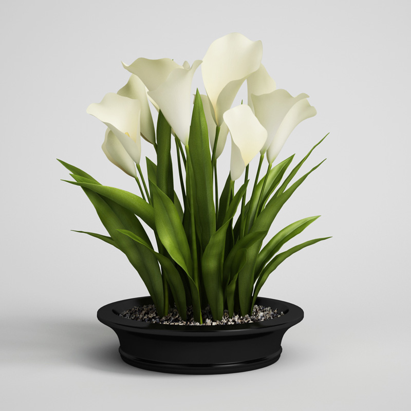 Calla Lilies In Planter Pot 22 Cgaxis 3d Models Store