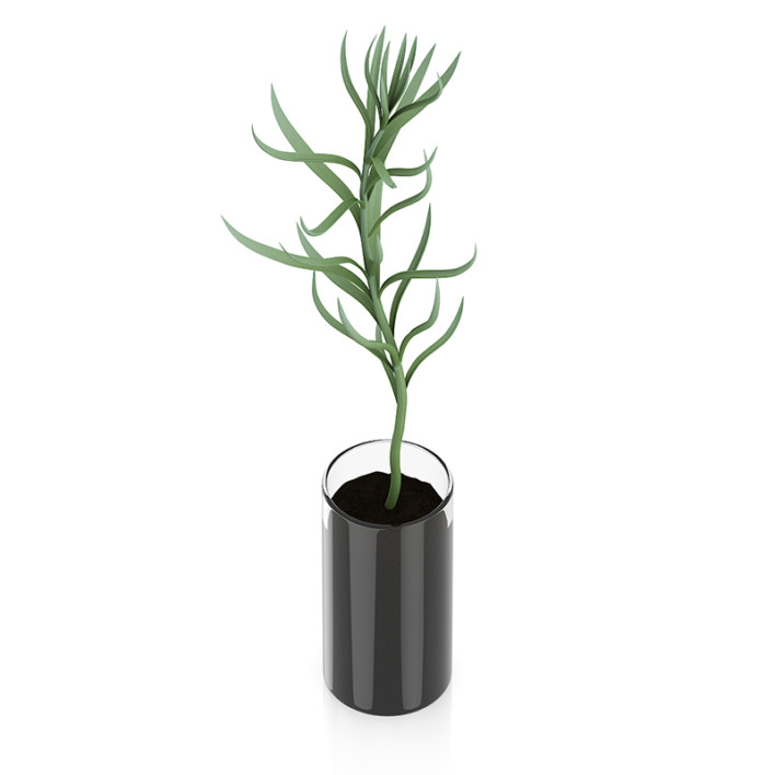 Plant in Glass Pot