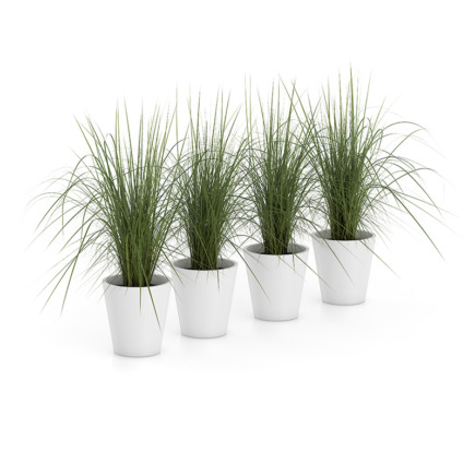 Four Plants in White Pots