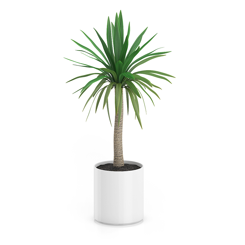 Palm In Pot.Palm Tree In Round Pot 1