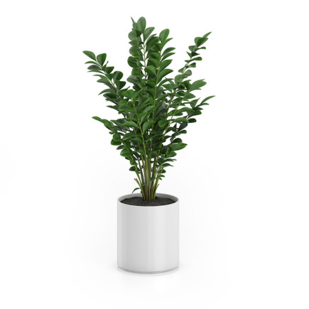 Plant in Round Pot