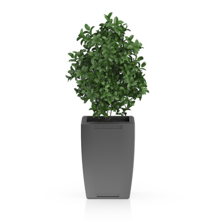 Plant in Rectangular Pot