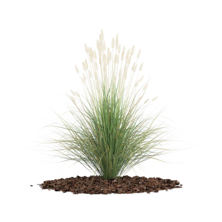 3d Ornamental Grass