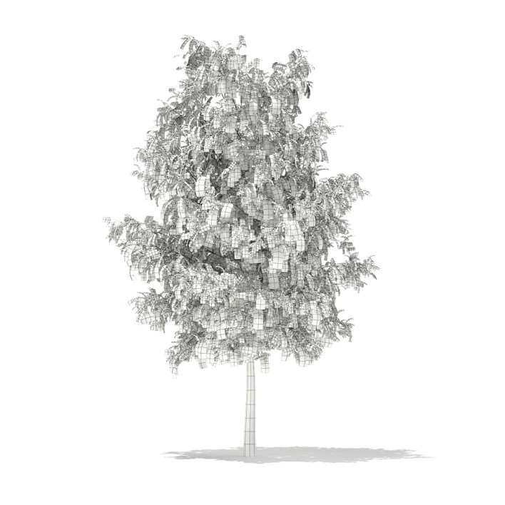 3d White Willow