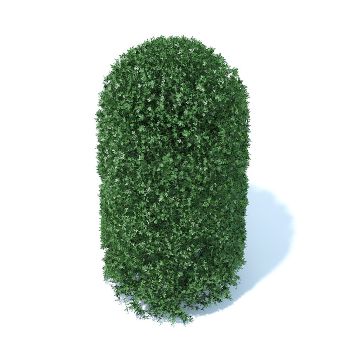 Tall Round Shrub 3D Model