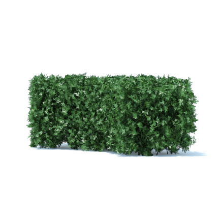 Curved Hedge 3D Model