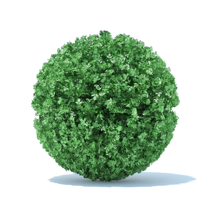 Spherical Hedge 3D Model