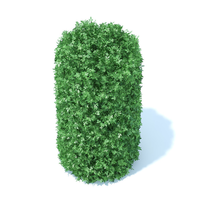 Cylindrical Hedge 3D Model