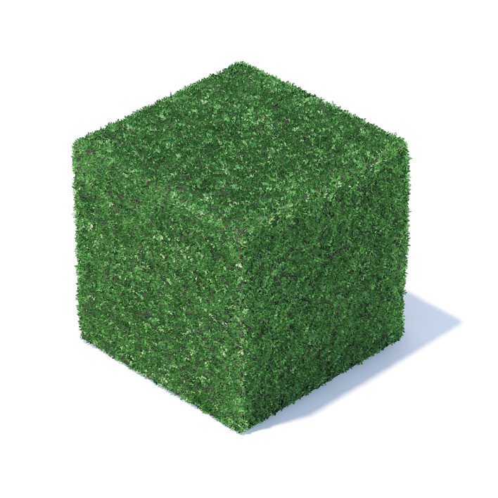 Cube Shaped Hedge 3D Model