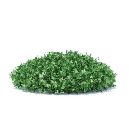 Short Round Hedge 3D Model