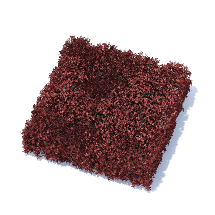 Square Red Hedge 3D Model