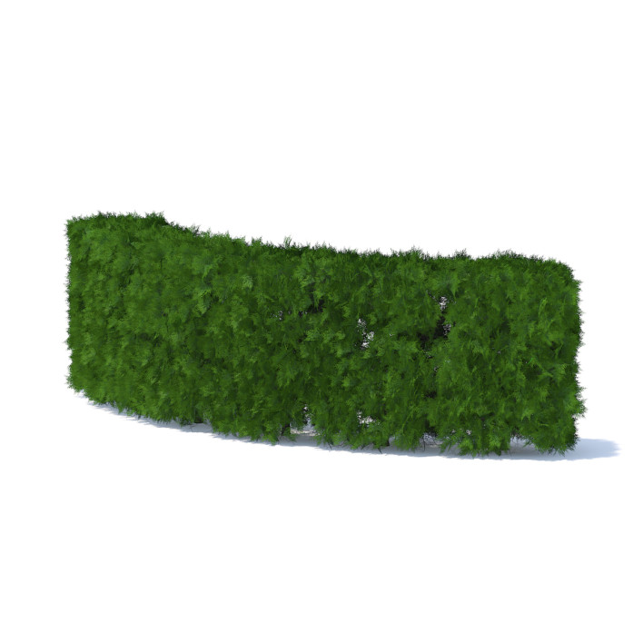 Curved Thuja Hedge