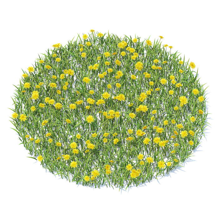 Grass with Sow-thistles 3D Model