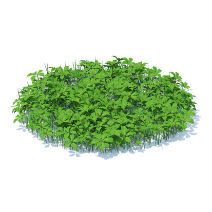 Grass with Plants 3D Model