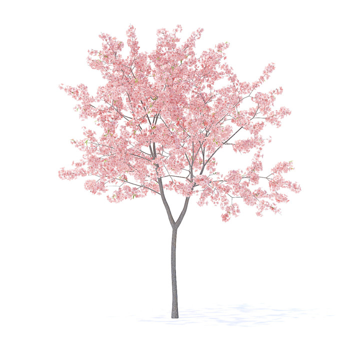 Fruit Trees 3D Models Collection - Volume 95