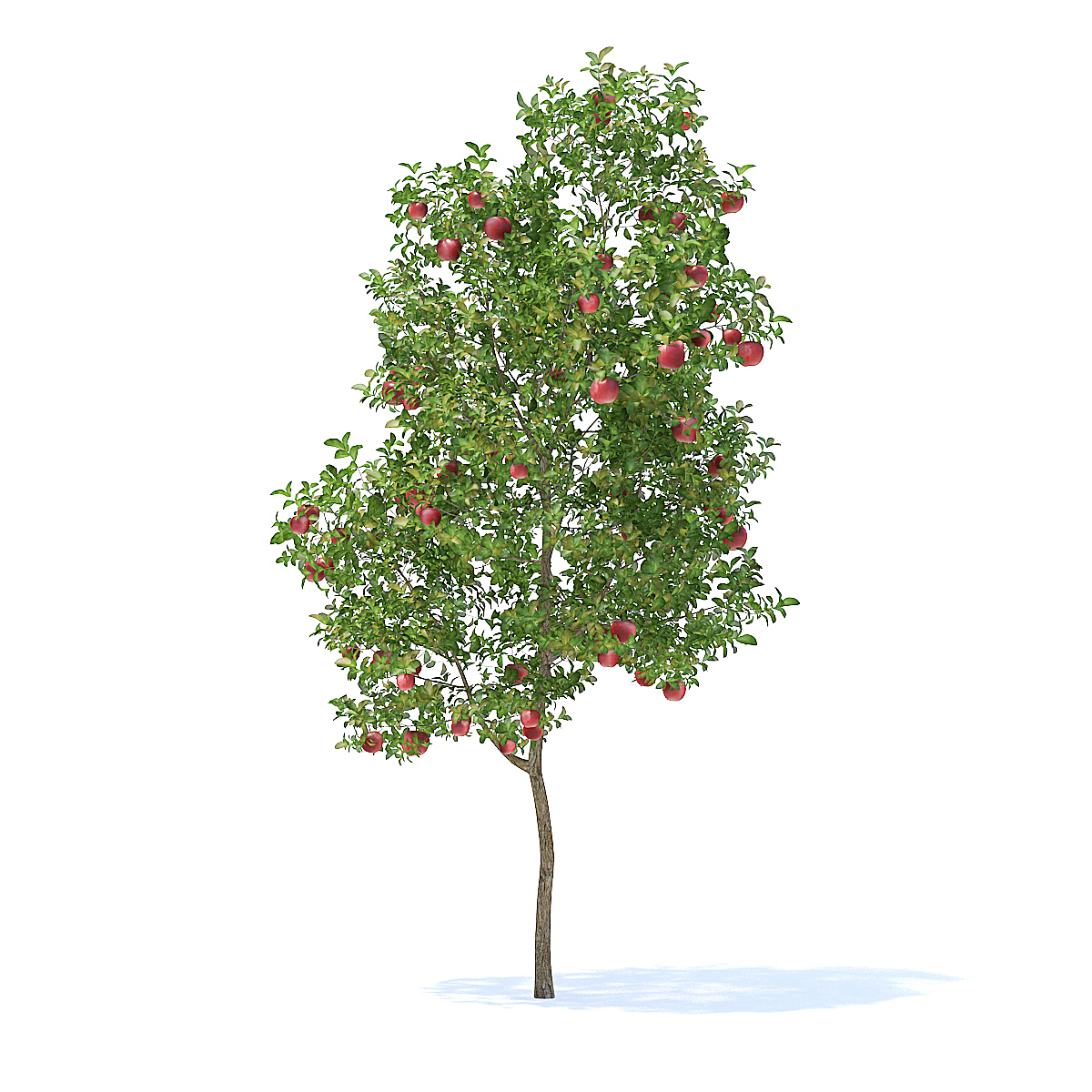 Apple Tree with Fruits 3D Model 3 8m