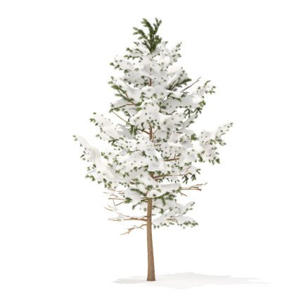 Pine Tree with Snow 3D Model 5.1m