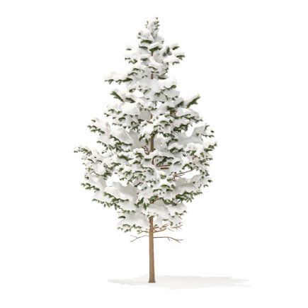 Pine Tree with Snow 3D Model 5.5m