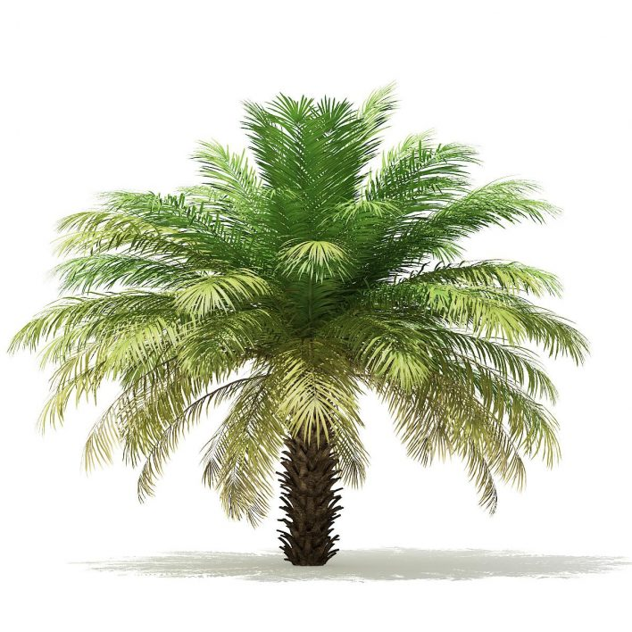 Palm Trees 3D Models Collection - Volume 110