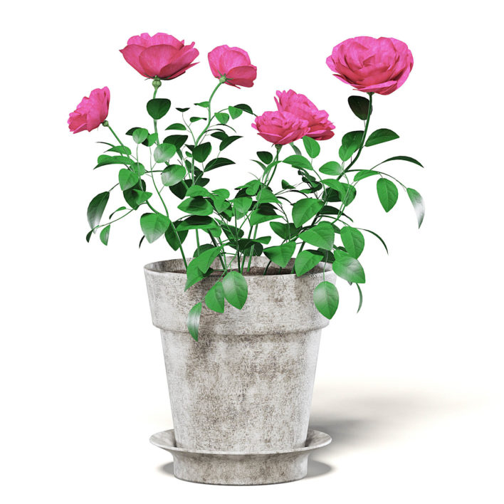 Pink Roses 3D Model in Ceramic Pot